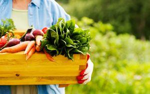 Bellanova: settore agroalimentare rientra nel Decreto Liquidità