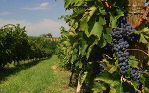 Coldiretti: taglio IVA su vino e cibo salva spesa italiani