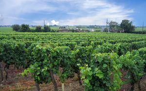 Italian Wine Brands conferma forte crescita vendite primi 4 mesi 2020