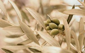 Università di Bari in prima linea nella valorizzazione dell'olio extravergine d'oliva di qualità.